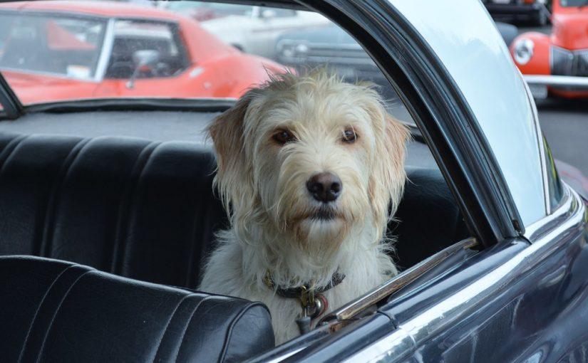 GPS dla psa – jaki jest najlepszy?